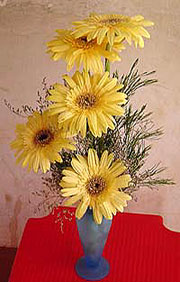 exotic gerberas in a beautiful vase